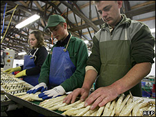 Polish asparagus sorters in Germany